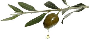 olio_oliva