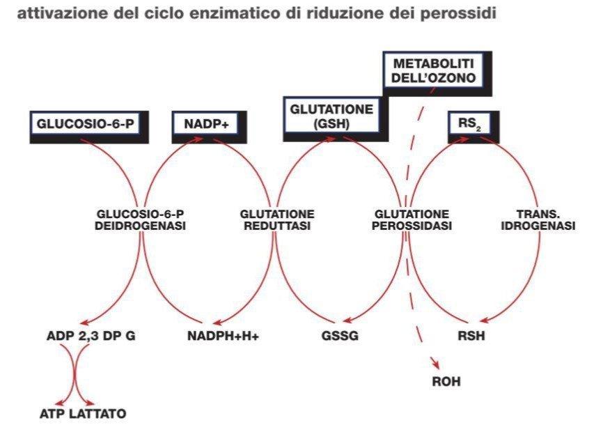 Olio Ozonizzato: benefici e processo biochimico